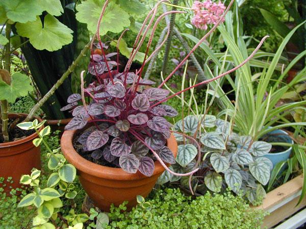 Комнатные растения и их вредители