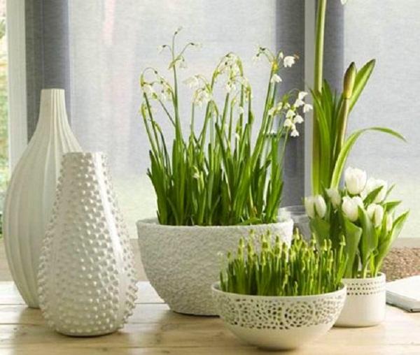 Домашние цветы купить в екатеринбурге